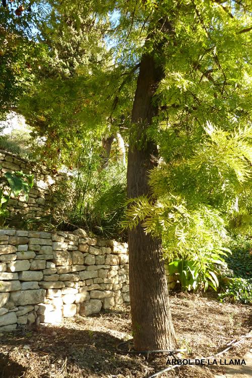 La serran a natural blog archive plantas de la for Arbol del fuego jardin