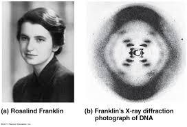 Resultado de imagen de radiografia rosalind franklin adn